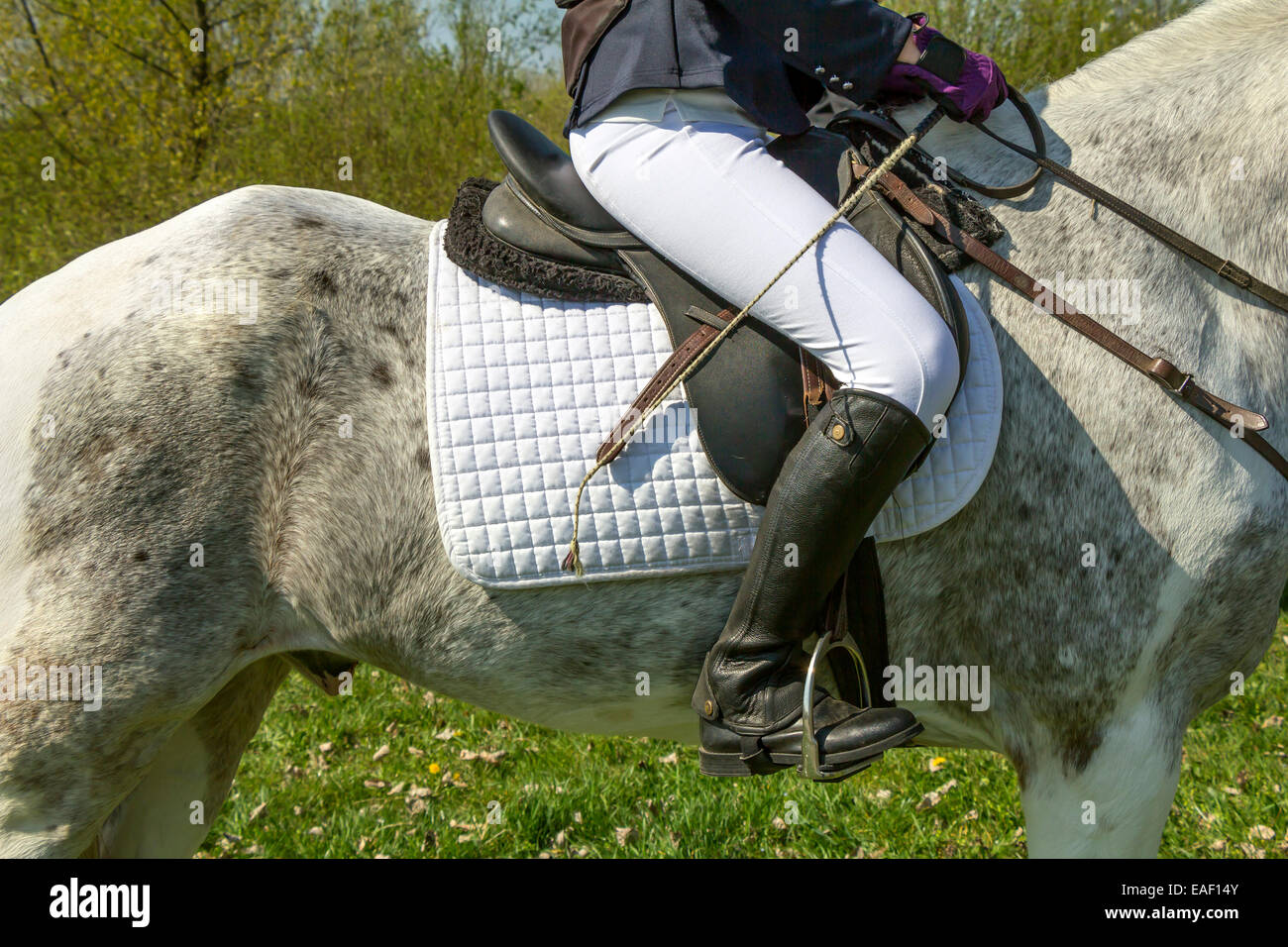 Clouse-up of Young girl rider and horse - Stock Image