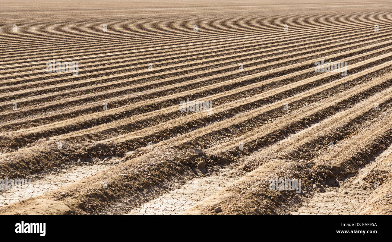 Imperial Valley farm field soil prepared for lettuce planting - Stock Image