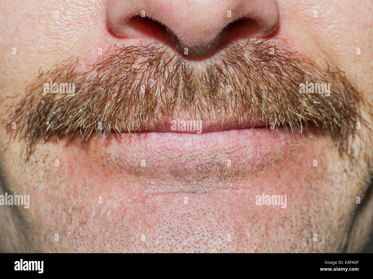 fresh 3 weeks old movember new scruffy mustache - Stock Image