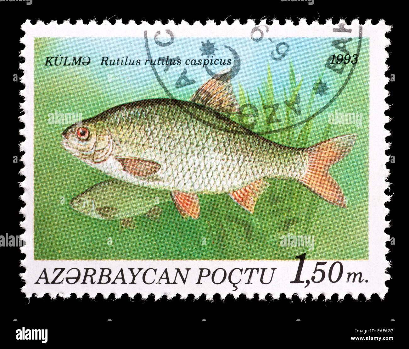 Postage stamp from Azerbaijan depicting common roach (Rutilus ruttilus) - Stock Image