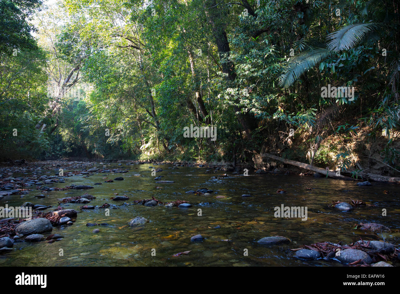 Freshwater stream and tropical rainforest in Taman Negara National Park, Malaysia Stock Photo