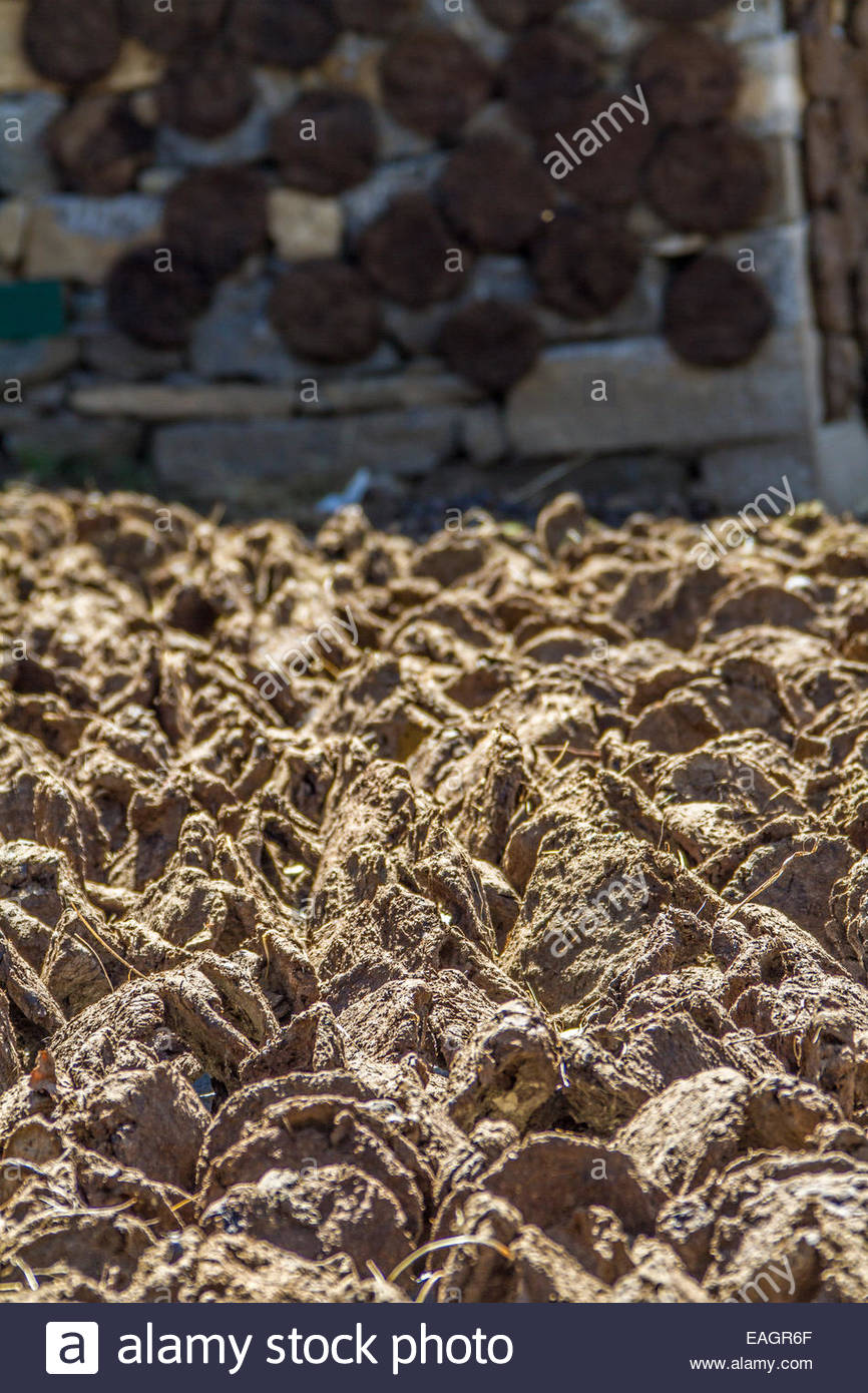 how to sell cow dung
