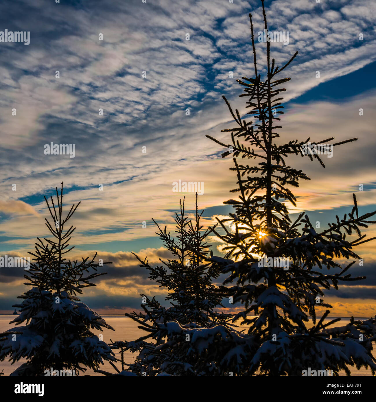 Spruce tree  silhouettes against a winter sky at sunset. - Stock Image