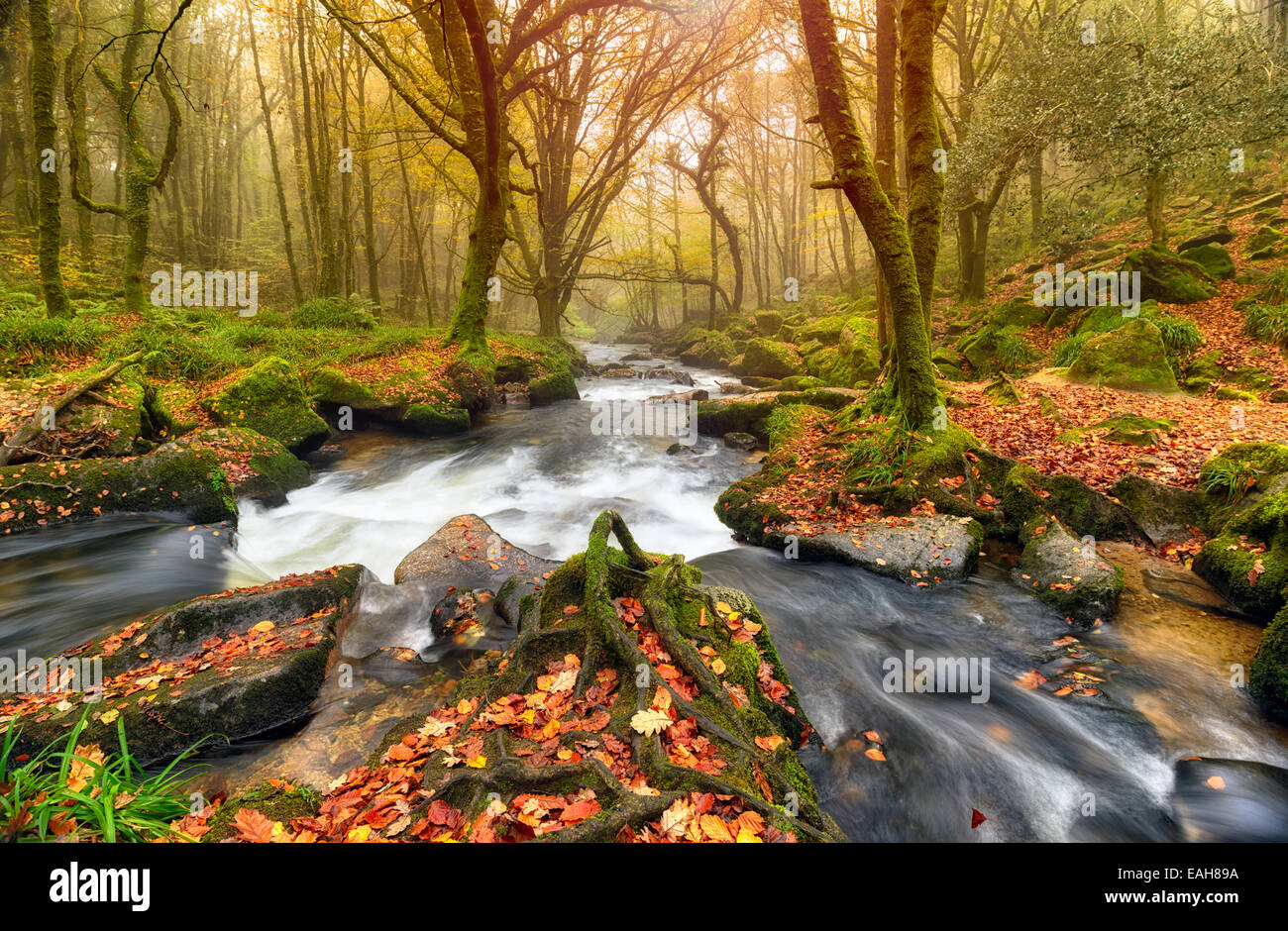 Fast flowing river through Autumn forest at Golitha Falls in Cornwall - Stock Image