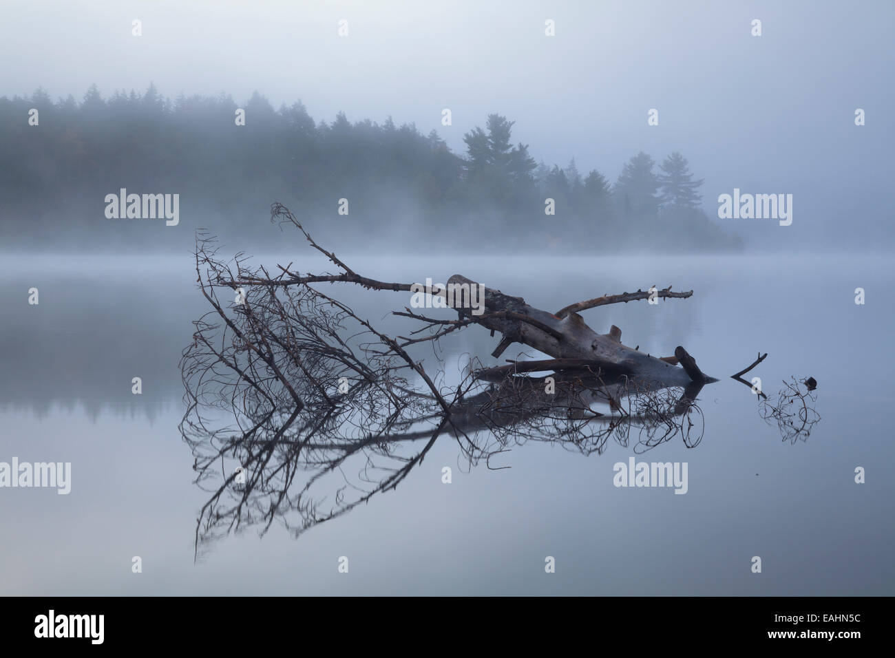 A dead tree in the water at sunrise. Algonquin Provincial Park, Ontario, Canada. - Stock Image