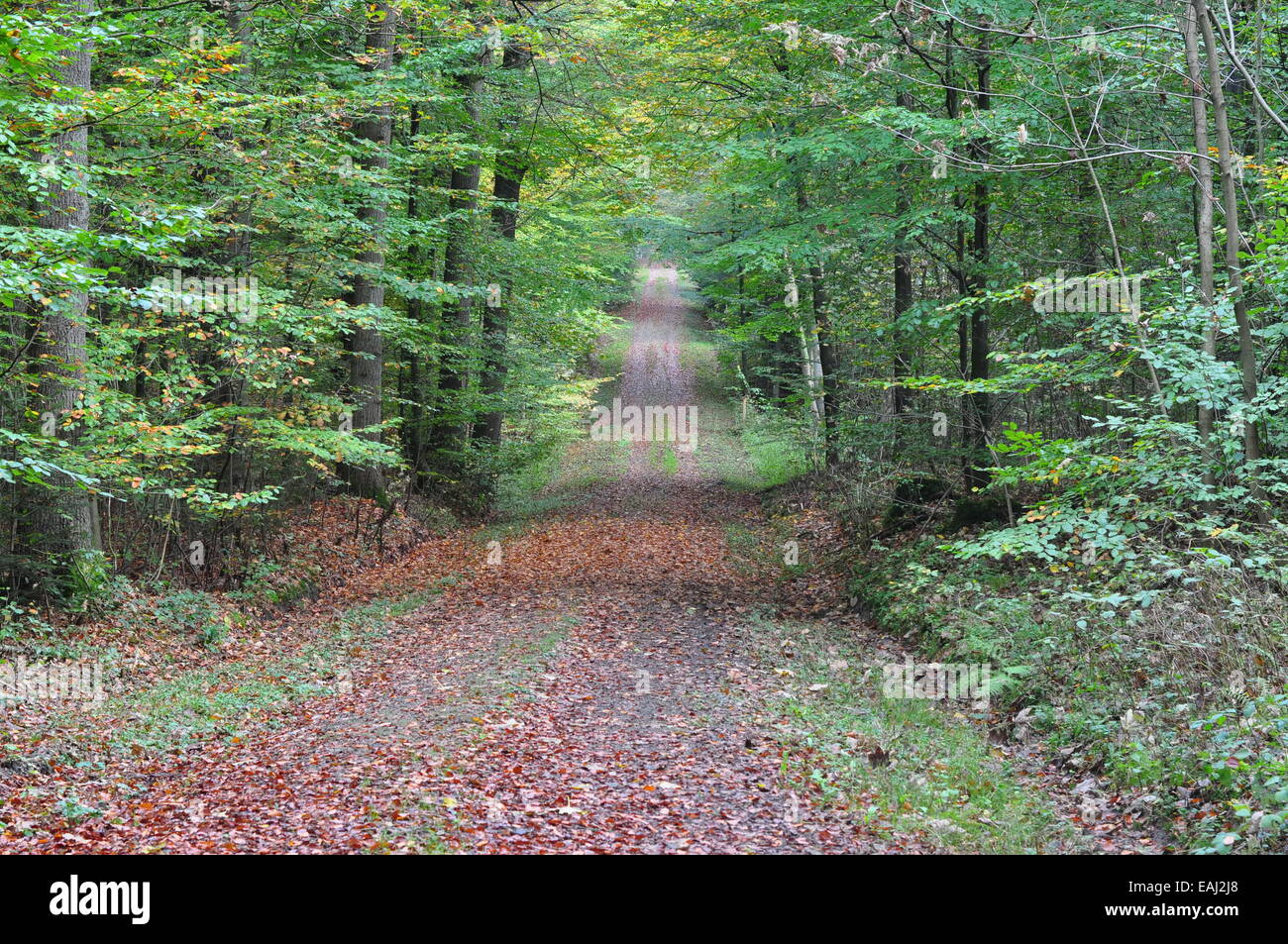 Alley in a beech grove near the 'witches' stairs/ Allee im Buchenwald nahe der Hexentreppe, Maiburg, Kreis - Stock Image