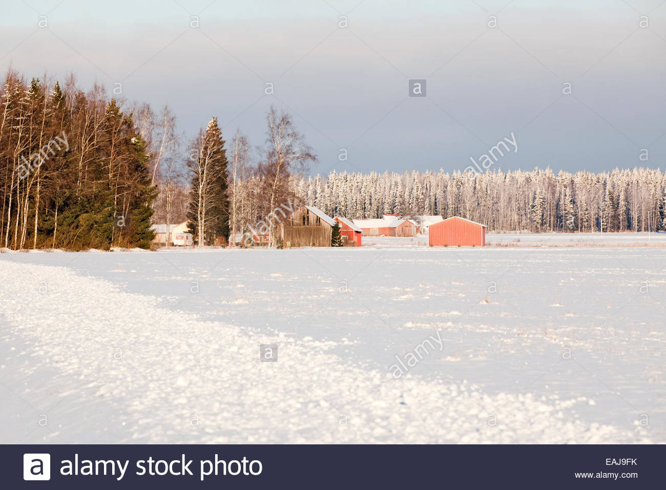 Rural countryside in Finland at winter - Stock Image