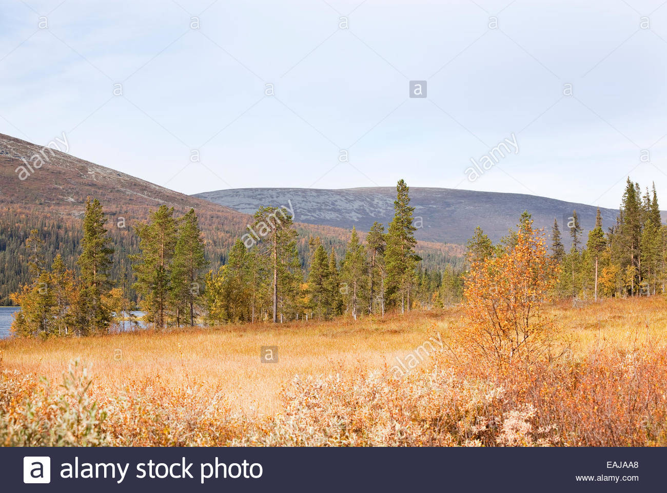 Autumn in Lapland - Stock Image