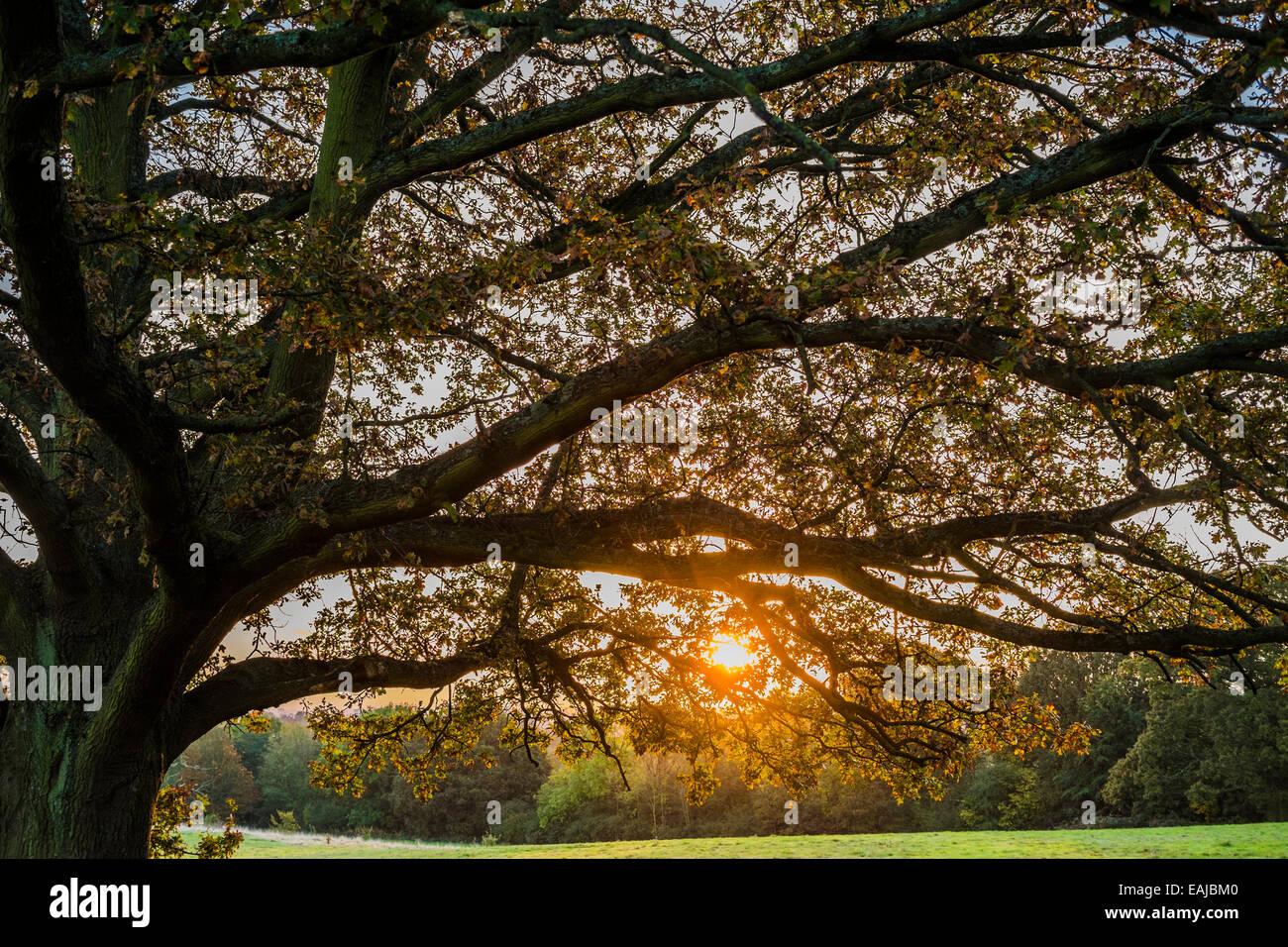 Autumn morning sunrise on Hampstead Heath - London - Stock Image
