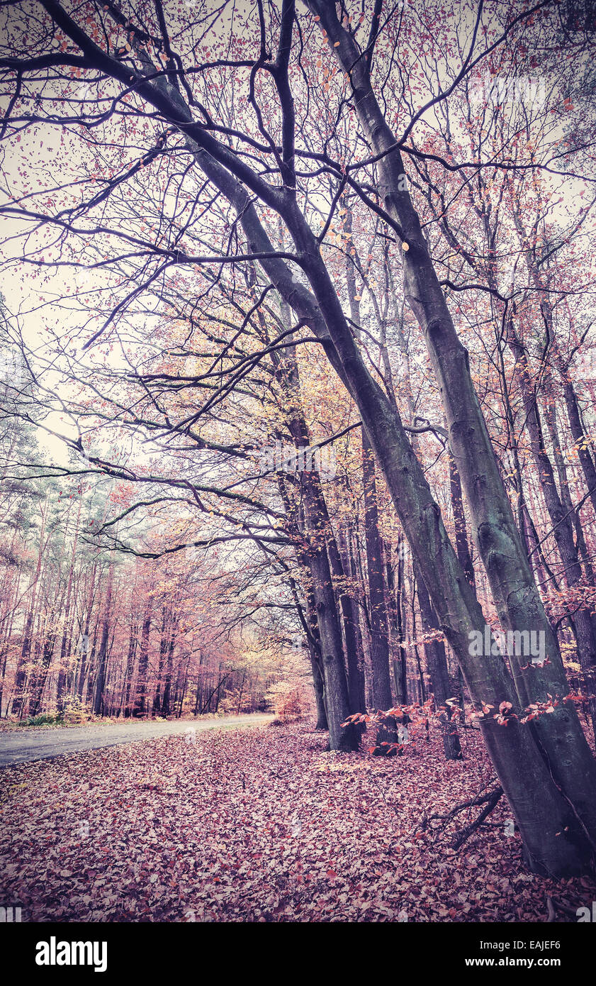 Retro vintage filtered picture of an autumnal forest. - Stock Image