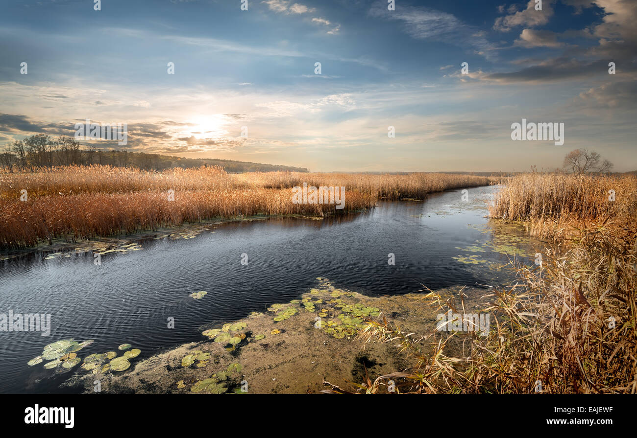 Autumn river and reeds and cloudy sky - Stock Image