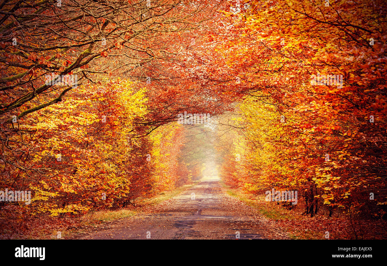 Road in a misty autumnal forest, intense colors filtered. - Stock Image