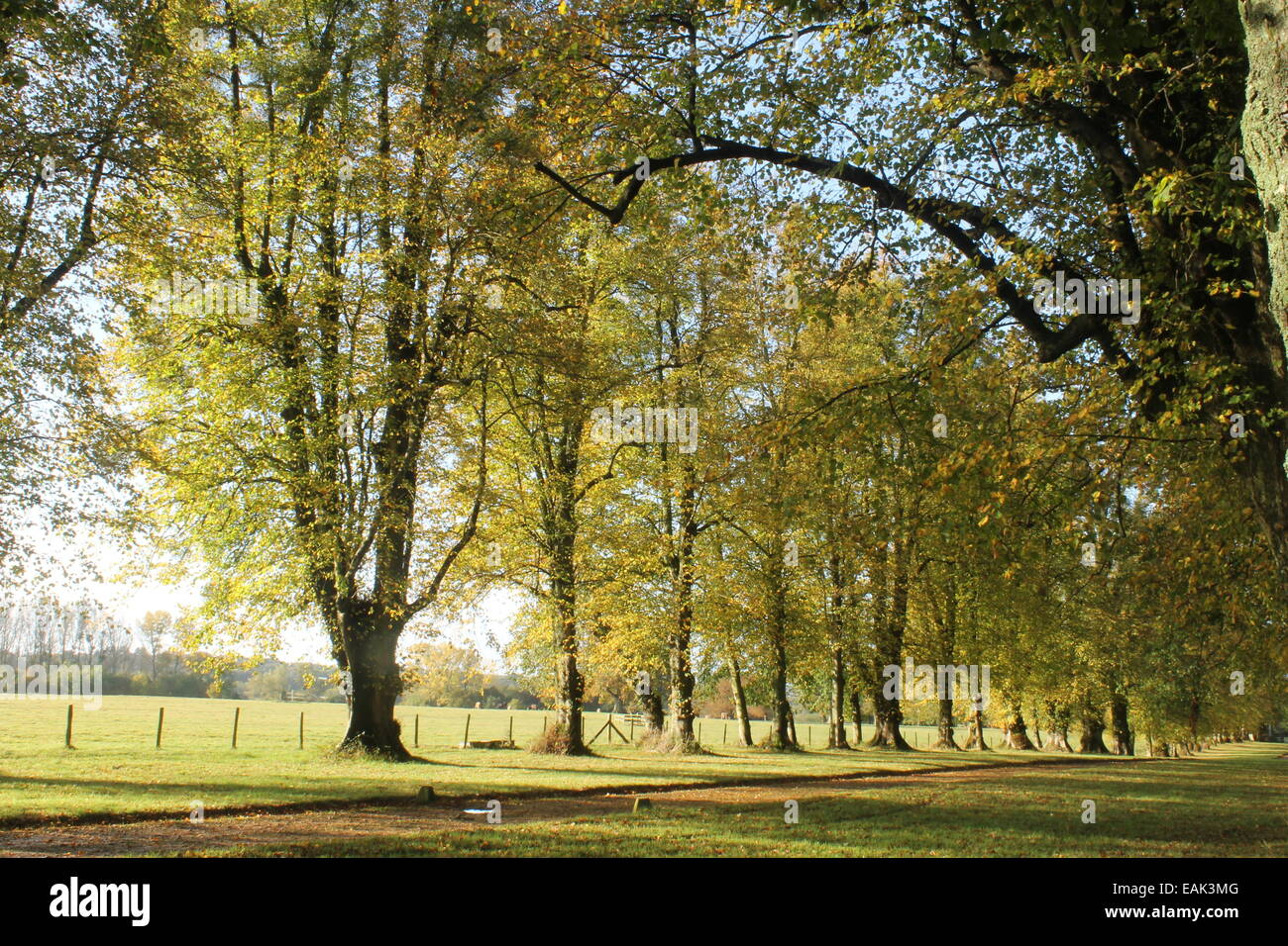 Avenue of trees at Hale Park, near Woodgreen, Fordingbridge, Hampshire, England UK, in the New Forest National Park - Stock Image
