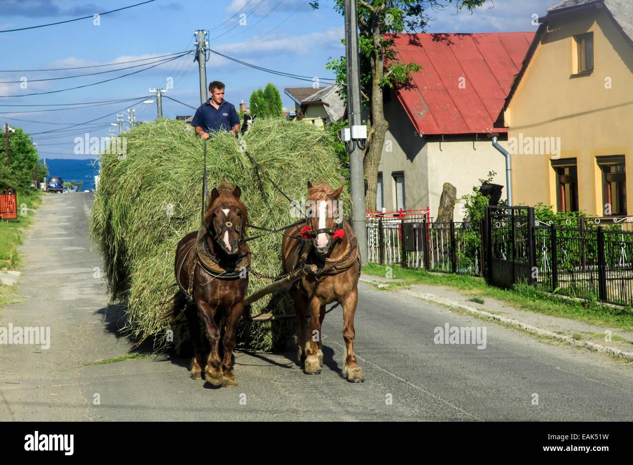 Slovakia, Banska Bystrica region, Horses and cart - Stock Image