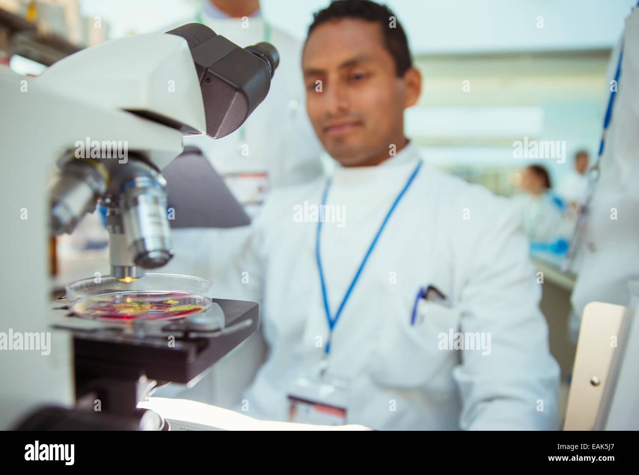 Scientist with sample under microscope in laboratory - Stock Image
