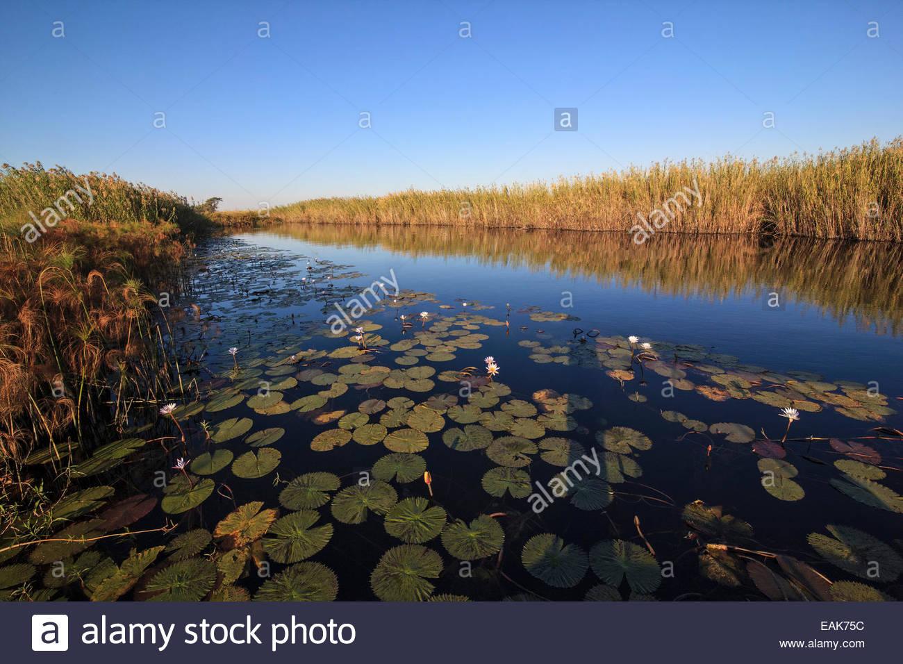 Okavango River, Panhandle region, Okavango Delta, North-West District, Botswana - Stock Image