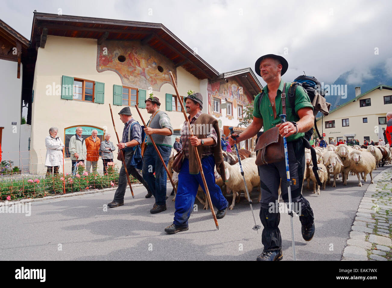 Shepherds driving a flock of domestic sheep during the Almabtrieb drive from the mountain pasture, Mittenwald, Werdenfelser - Stock Image