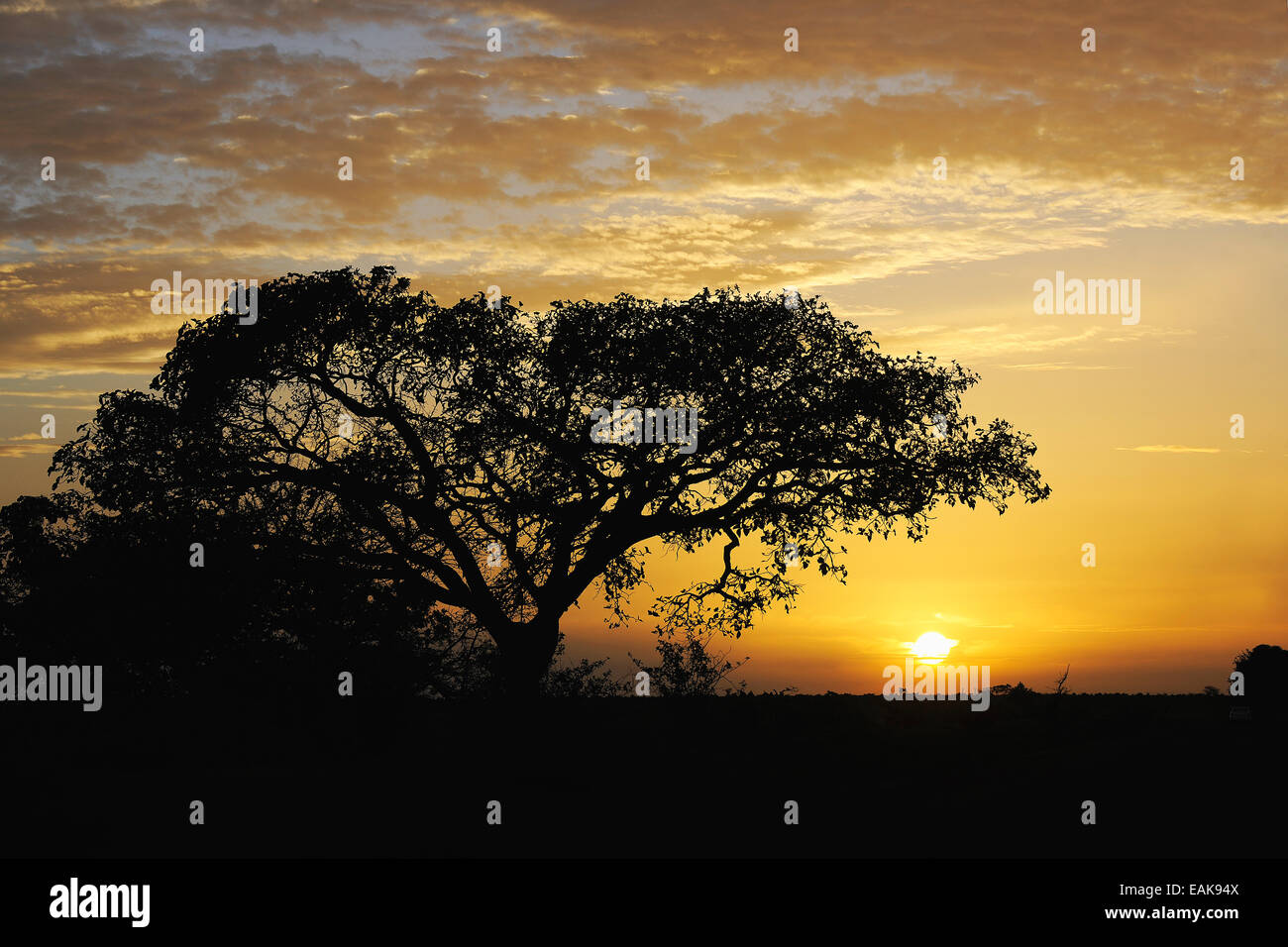 Landscape of Central Cameroon in the sunset, Adamawa Region, Cameroon - Stock Image