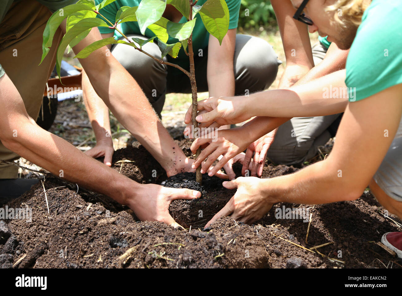 People planting tree seedling together - Stock Image