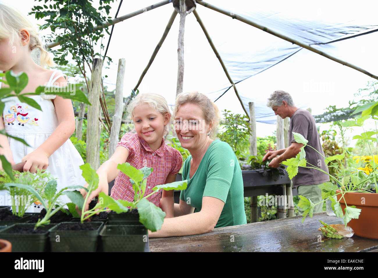 Smiling woman with two girls looking at seedlings in greenhouse, man in background - Stock Image