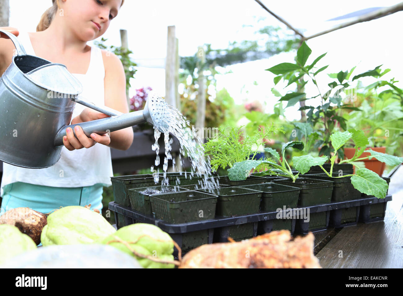 Girl watering potted seedlings with watering can in greenhouse Stock Photo