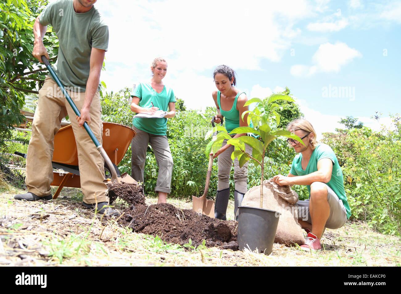 people planting tree  community garden stock photo