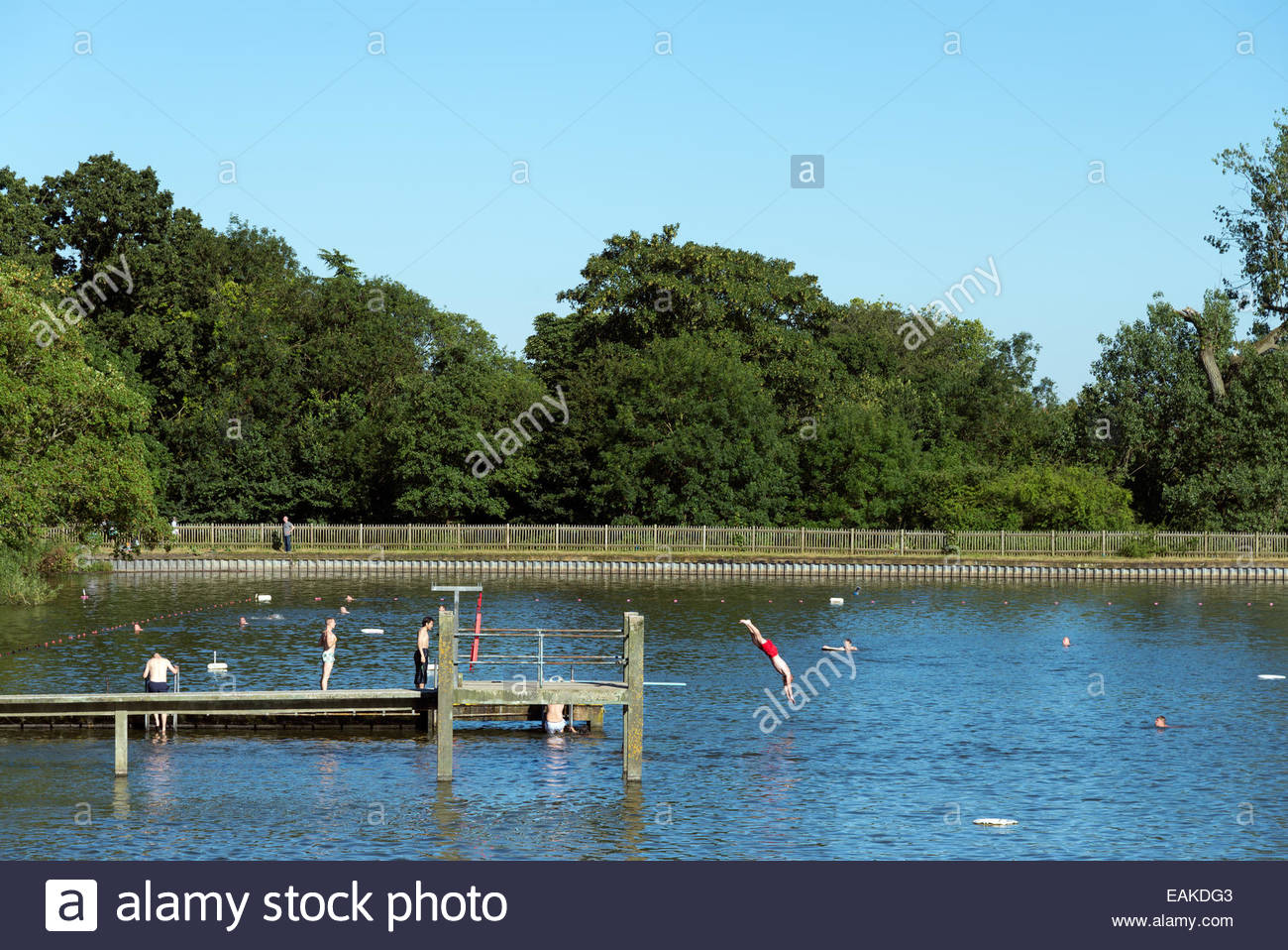 Hampstead ponds stock photos hampstead ponds stock images alamy for A swimming pool is 50m long and 20m wide