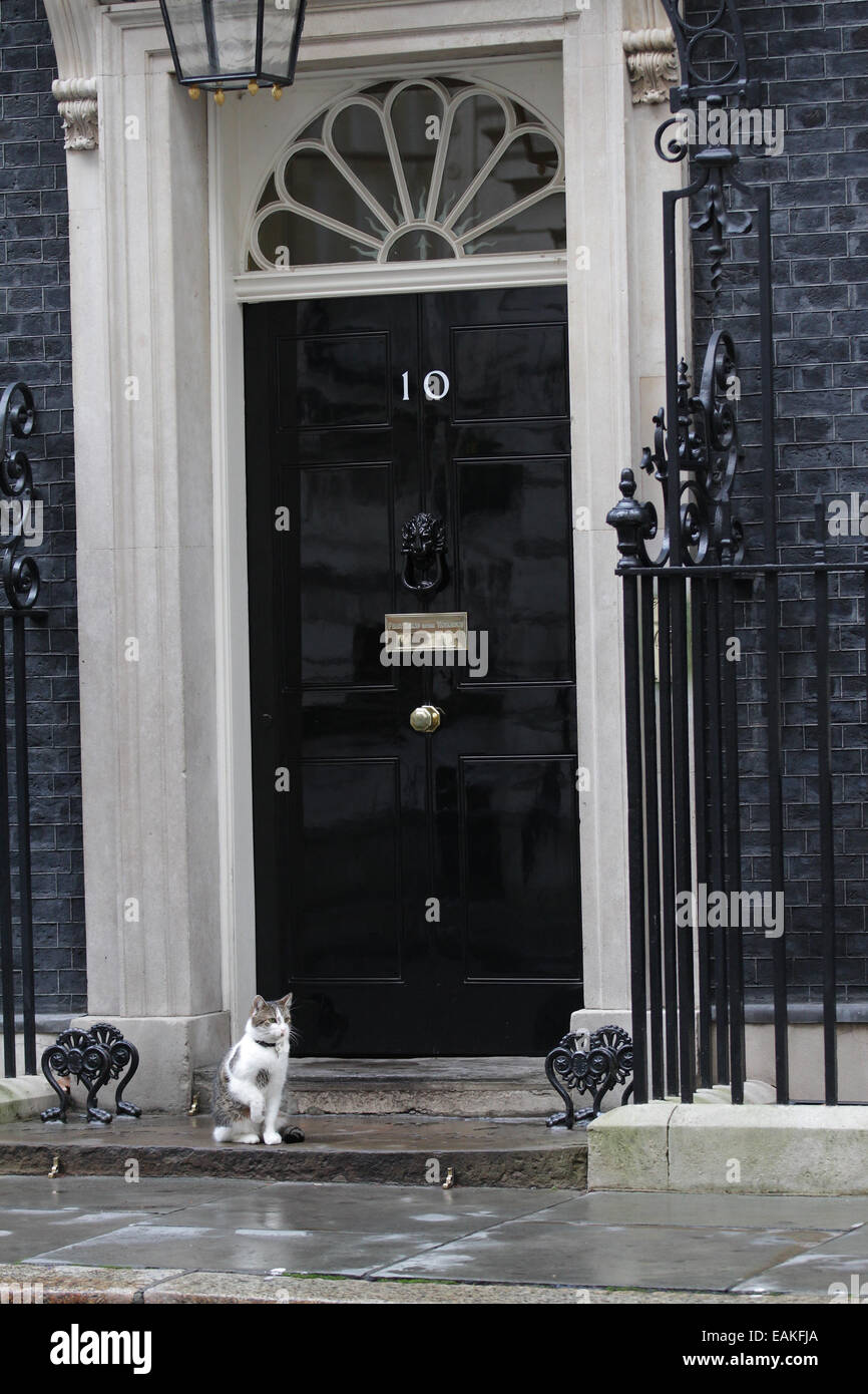 London, UK. 17th November, 2014. Larry the Downing Street cat seen at Downing Street in London. - Stock Image