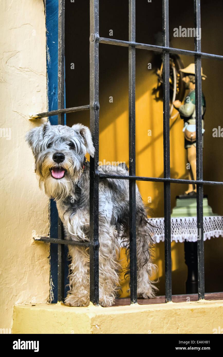 Dog in Window - Stock Image