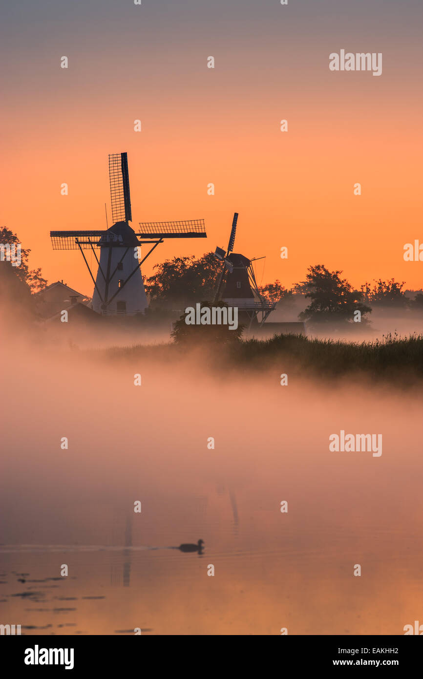 Morning glory in the little village of Ten Boer in the province of Groningen in the northern part of the Netherlands - Stock Image
