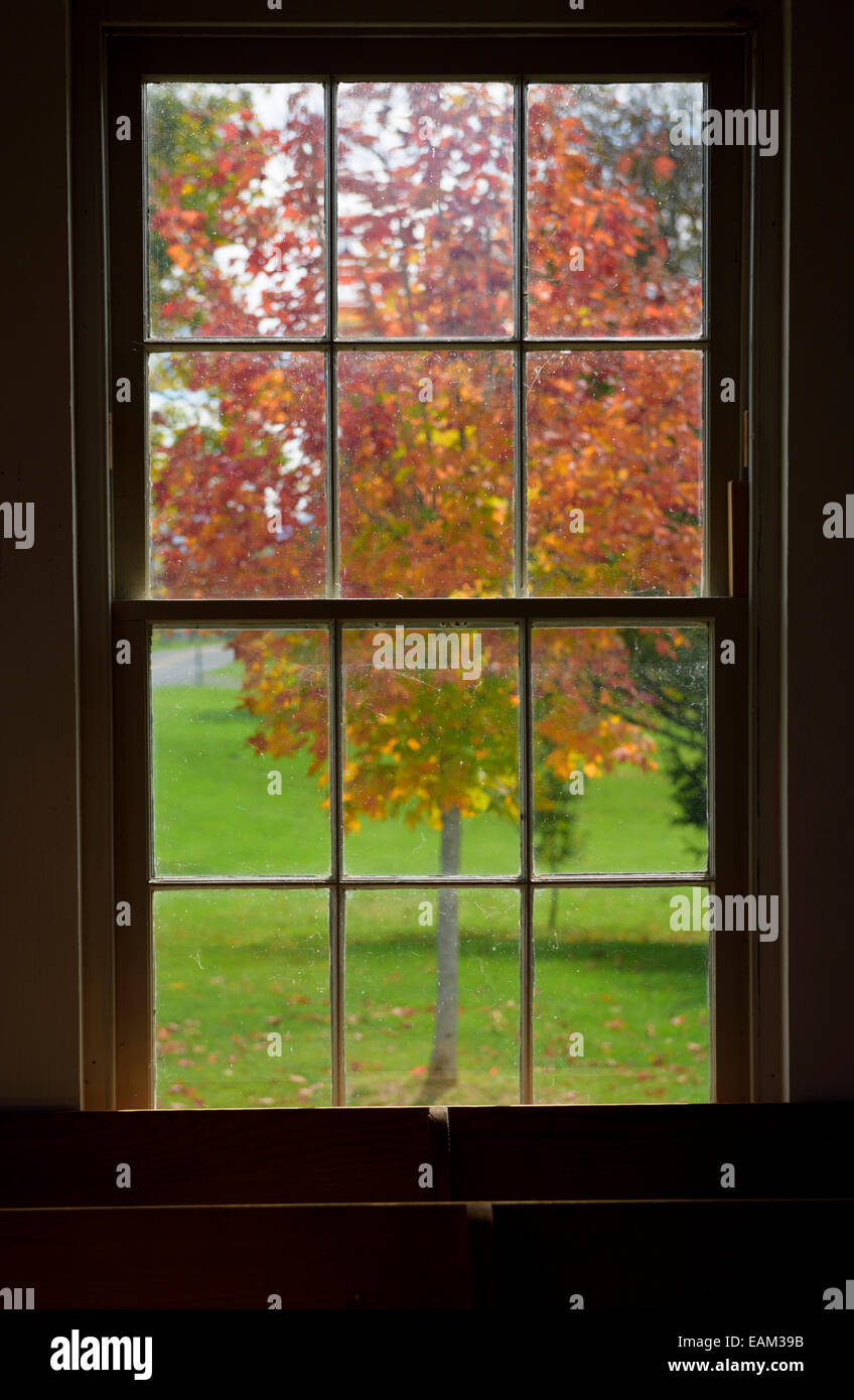 Looking Outside At A Tree In Fall Colors Framed In Window Stock