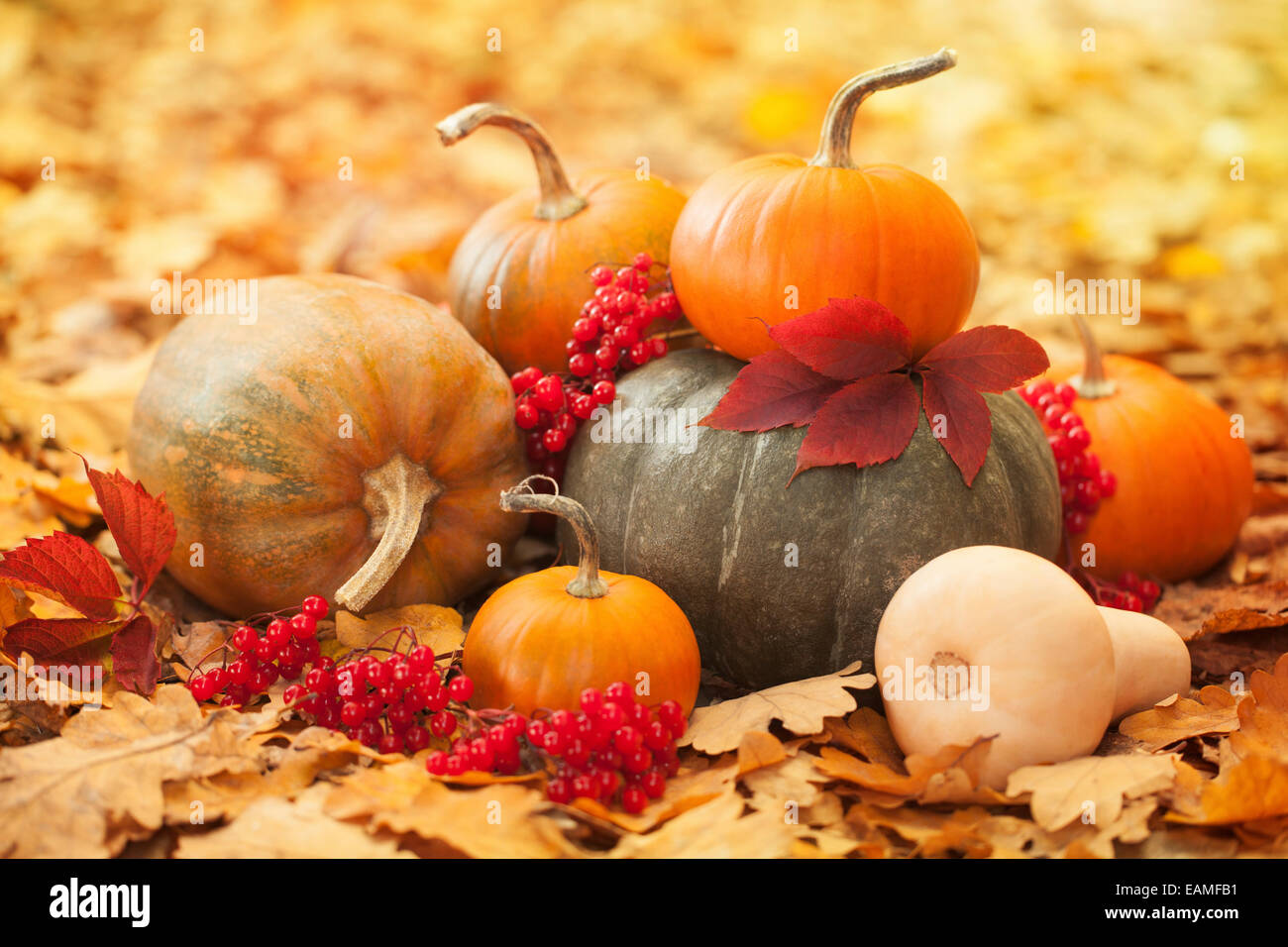 Pumpkins in a garden - Stock Image