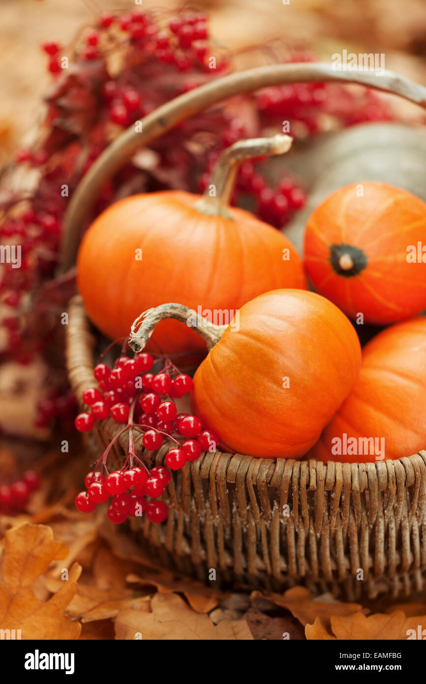 Small pumpkins and ashberries in a basket - Stock Image