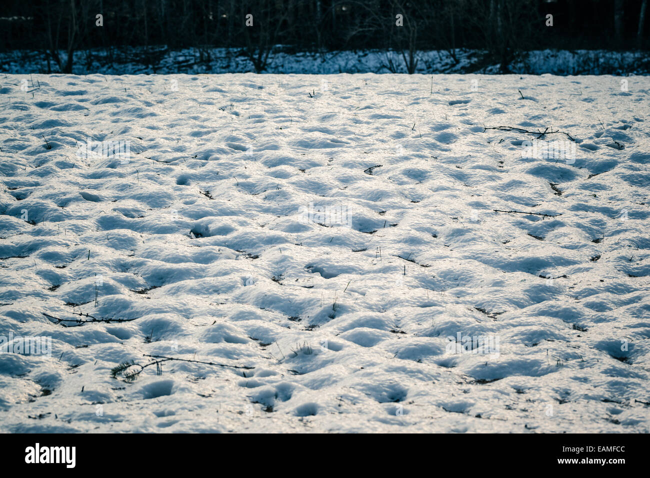 a snow covered groung in the woods with mounds - Stock Image