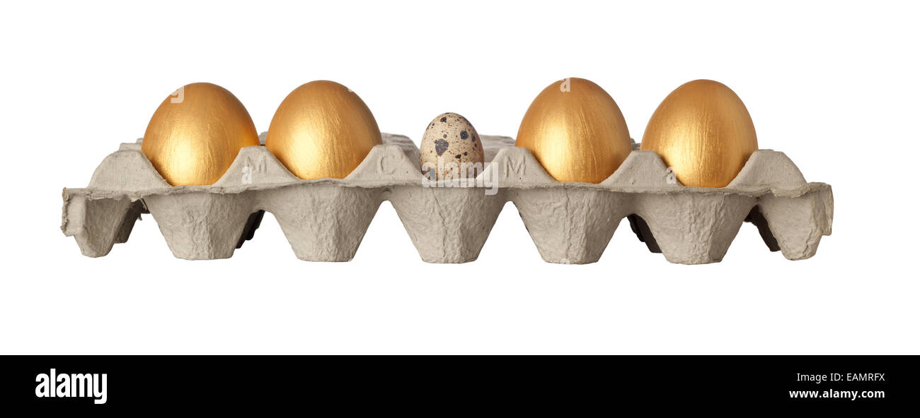 Quail egg in the middle of a tray of golden eggs isolated on white background - Stock Image