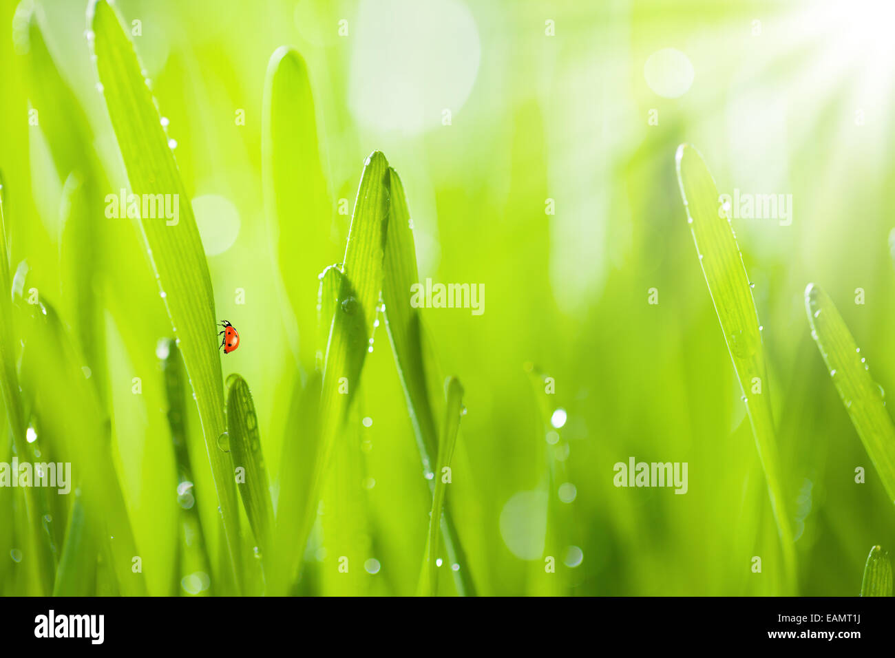 Macro photo of fresh grass with drops of water. Low depth of focus - Stock Image
