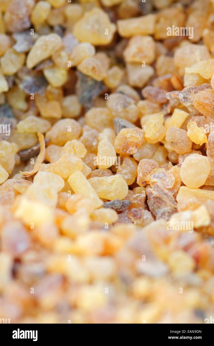 Boswellia Sacra, Incence Resin. - Stock Image