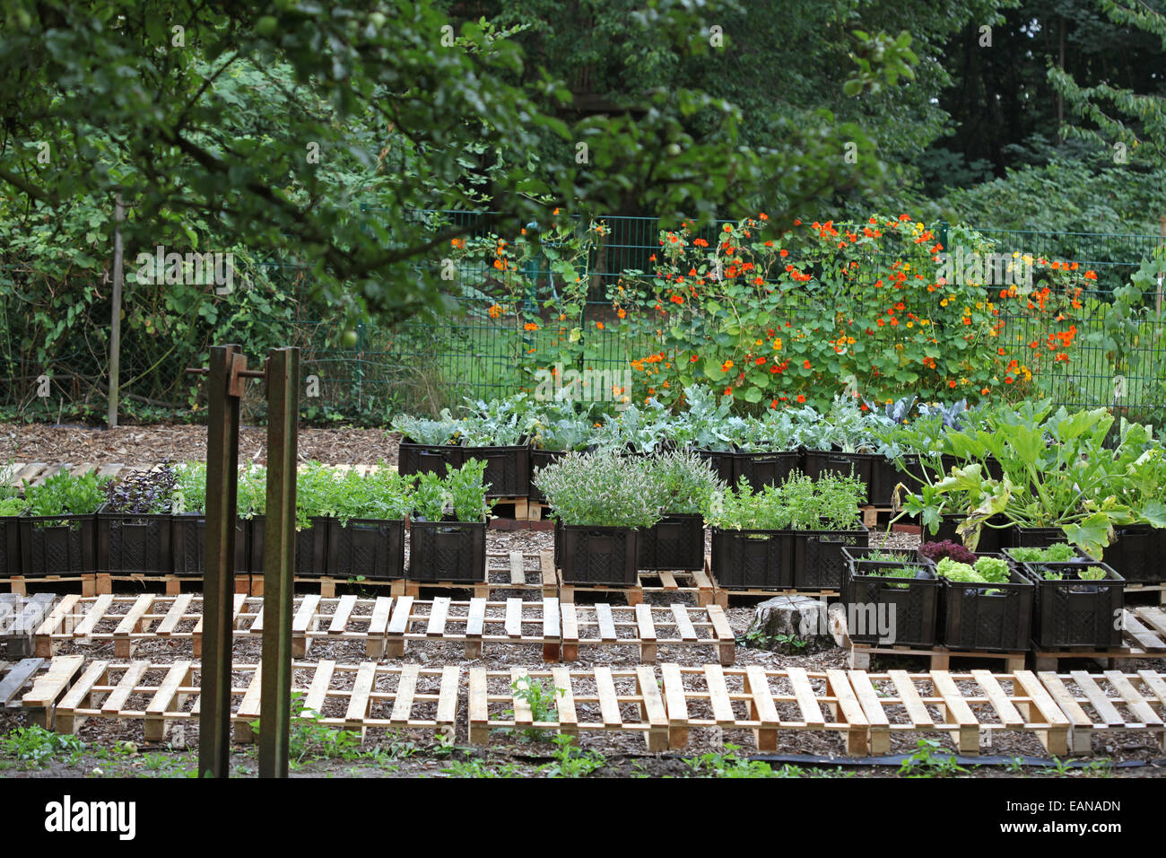 Vegetables farmed in plant boxes in an urban gardening project in Germany - Stock Image