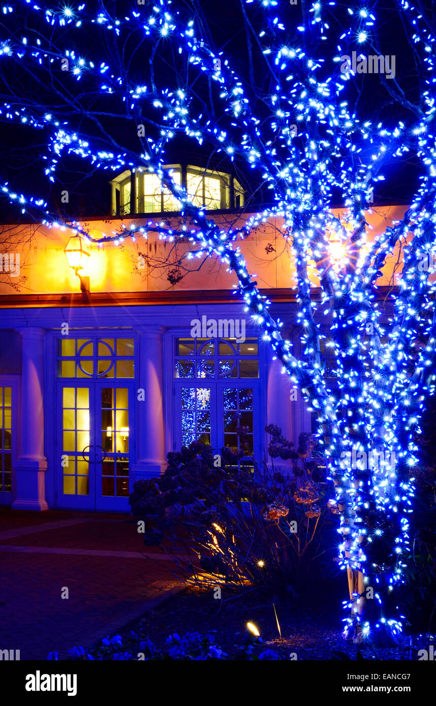Outdoor Christmas Trees Have Been Decorated With Bright Blue Lights