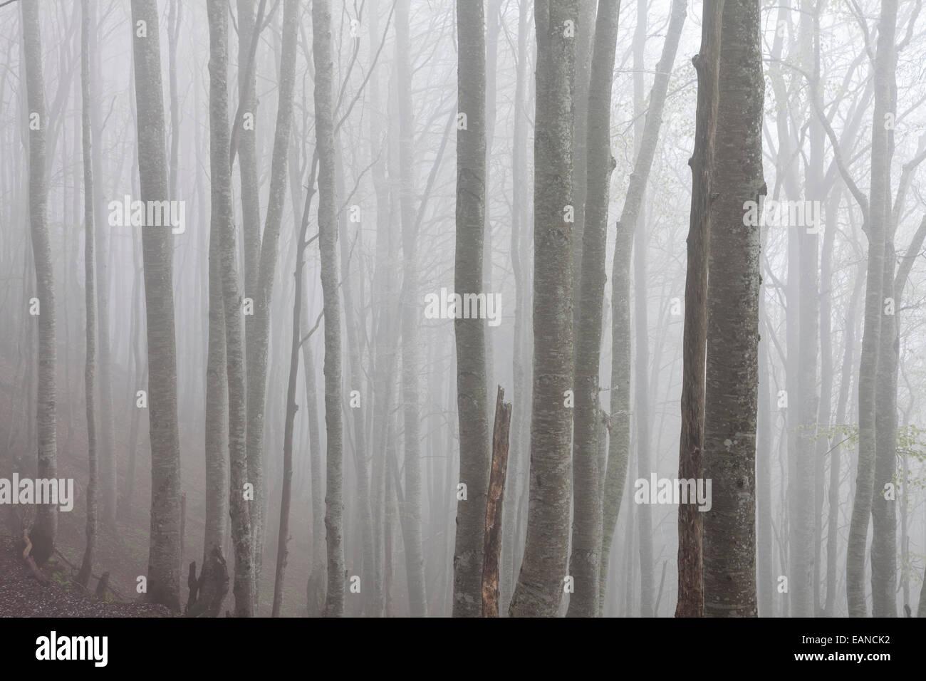 Natural park of Le Chartreuse, Savoie, Rhône-Alpes, France - Stock Image