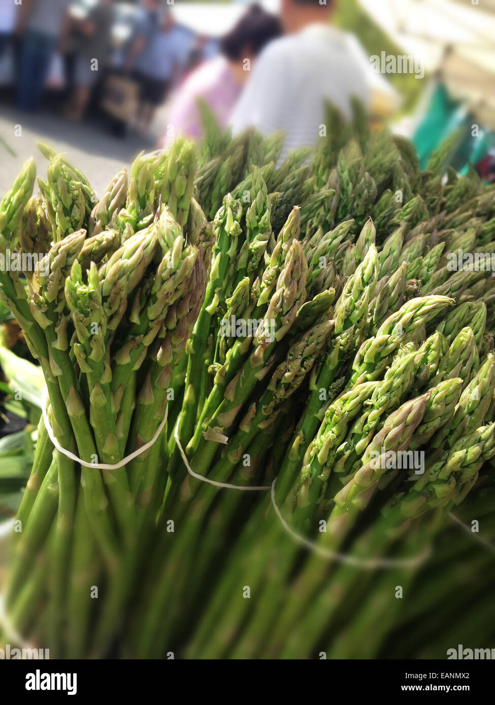 Asparagus bunches at a farmers market stand - Stock Image