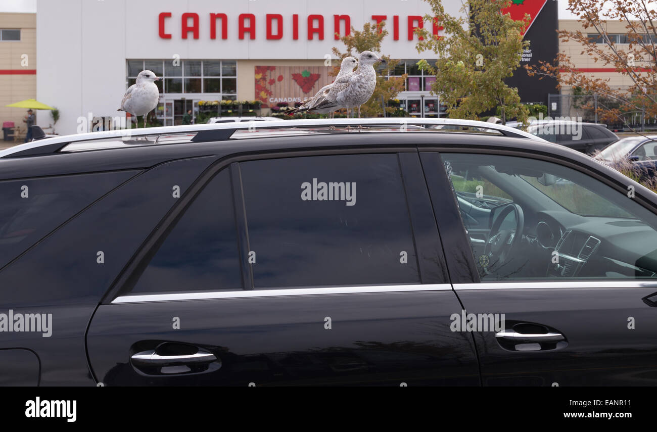 Truck Roof Rack Canadian Tire 12 300 About Roof
