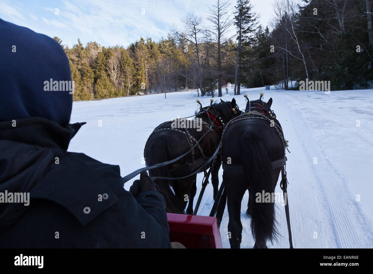 Pair of draft horses pull sleigh along scenic route at base of Gunstock Mountain - Stock Image