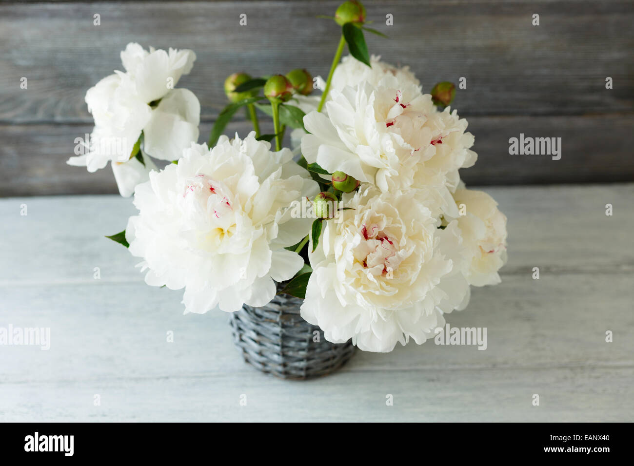 White peonies in a vase on the boards, wooden background - Stock Image