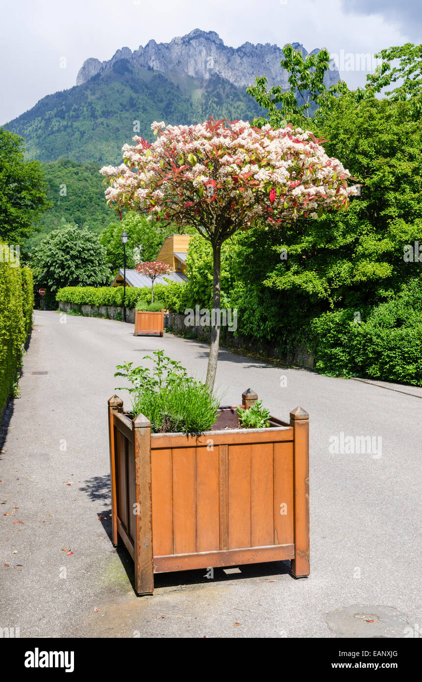 Trees In Planter Boxes Stock Photos Trees In Planter Boxes Stock