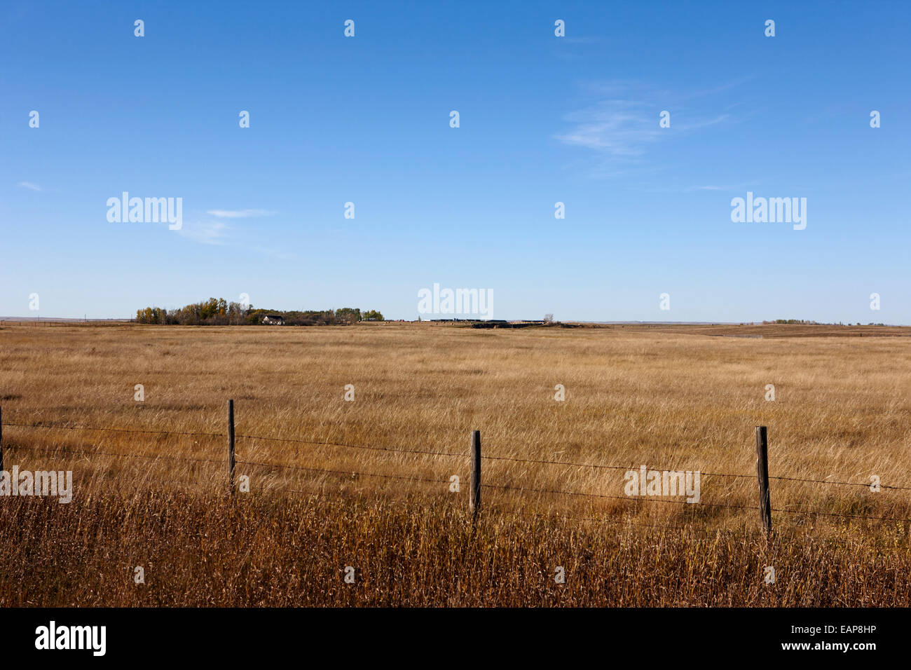 rural prairie grassland and farmland in open fields bengough Saskatchewan Canada - Stock Image