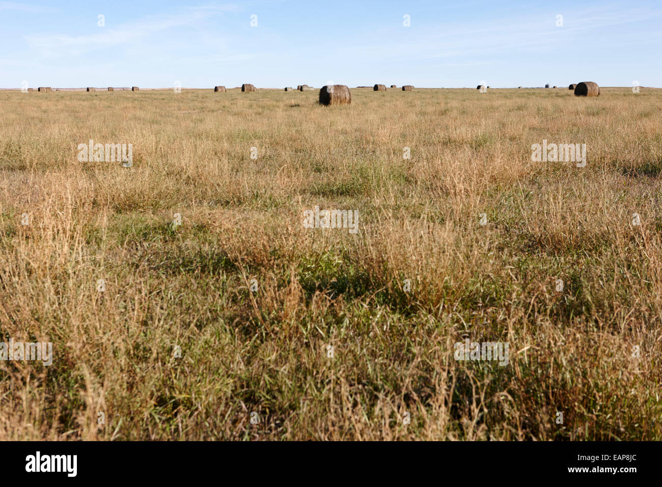 rural prairie grassland open fields bengough Saskatchewan Canada - Stock Image