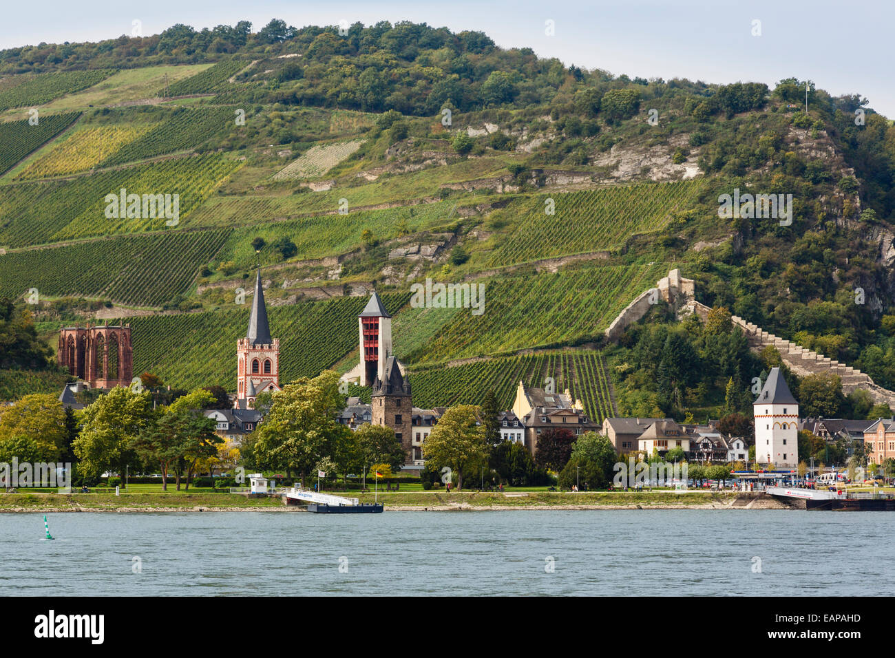 View across middle Rhine River to hillside vineyard above the Wernerkapelle ruin in Bacharach am Rhein, Rhineland, - Stock Image