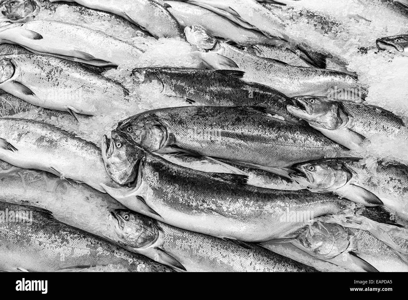 Salmon at Fish Market - Stock Image