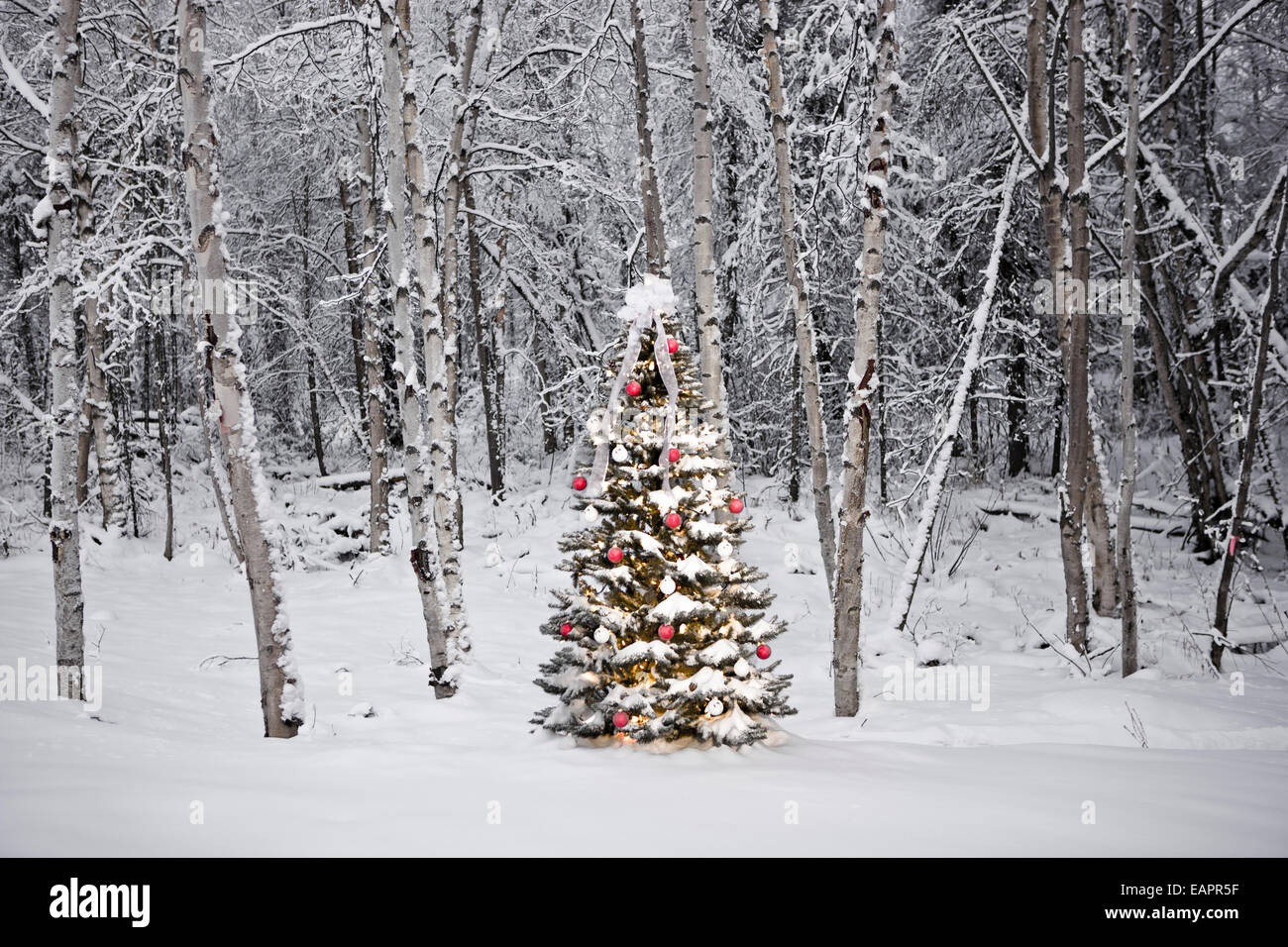 Decorated Christmas Tree In Front Of A Snow Covered Birch Forest